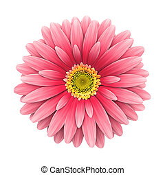 розовый, цветок, оказывать, -, isolated, маргаритка, белый, 3d