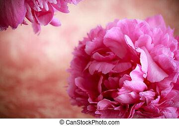 розовый, цветы, пион