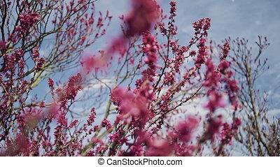 розовый, buds, ветви, небо, синий, дерево, против, раскачивание, ветер