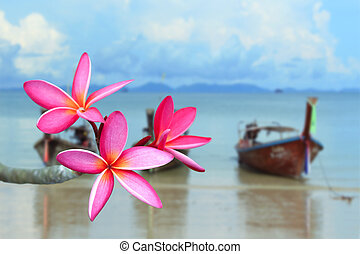 розовый, frangipani, цветок, пляж