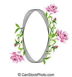 розовый, square., flower., роза, set., орнамент, иллюстрация, акварель, задний план, цветочный, граница, рамка, ботанический