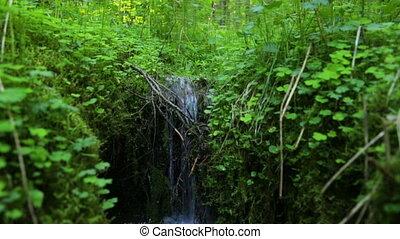 ручей, лето, лес