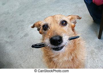 ручка, собака