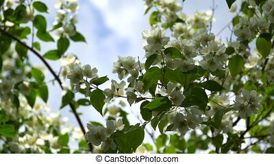 сад, весна, blossoming, дерево, против, небо