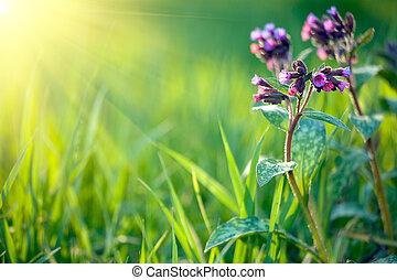 свежий, задний план, весна