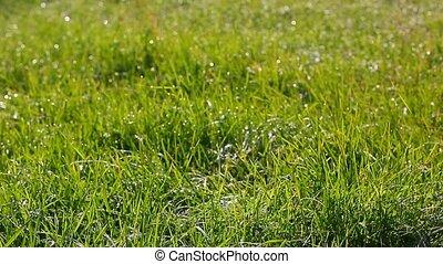 свежий, трава, -, натуральный, задний план