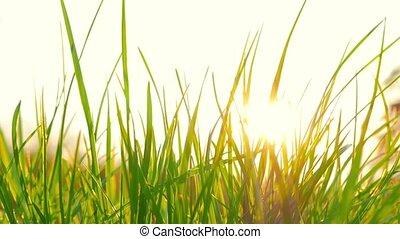свежий, трава, солнце
