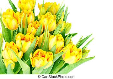 свежий, цветы, желтый, тюльпан