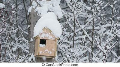 сделал, зима, nailed, снегопад, рука, forest., tree., скворечник