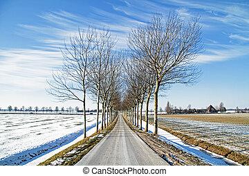сельская местность, нидерланды, winterlandscape
