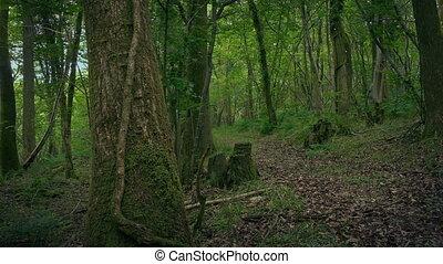 сельский, лесистая местность, перемещение, выстрел, дорожка