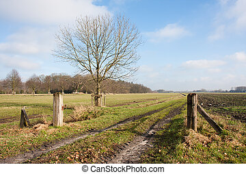 сельский, пейзаж, весна, голландский