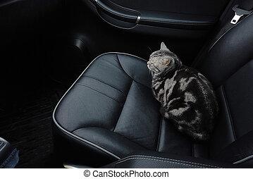 сиденье, автомобиль, кот
