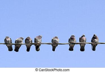 сидящий, весна, pigeons, согревание, солнце, самих себя, ...