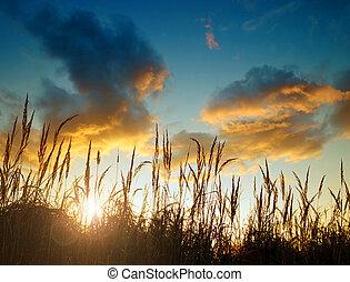 силуэт, of, высокий, трава