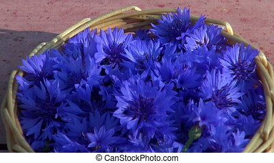 синий, василек, медицинская, blossoms