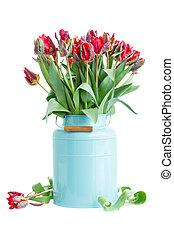 синий, весна, горшок, цветы, тюльпан