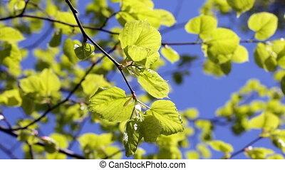 синий, зеленый, leaves, небо, против