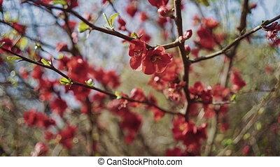 синий, крупный план, ветви, дерево, leaves, небо, против, новый, цветы, красный