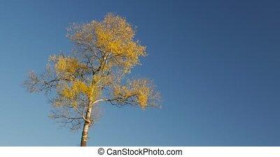 синий, осень, небо, дерево, один, вершина горы