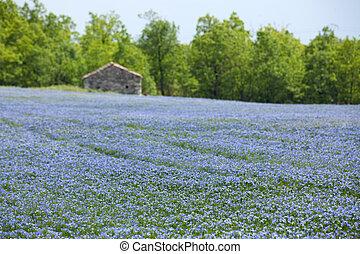 синий, поле, лен