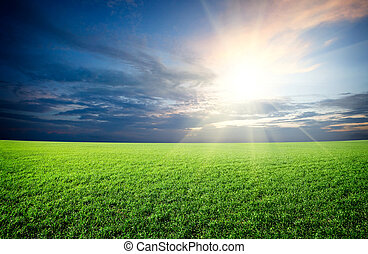 синий, солнце, небо, зеленый, поле, закат солнца, под, свежий, трава