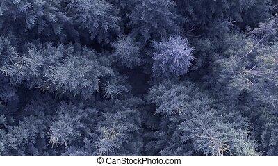 синий, хвойный, выстрел, над, трутень, лес, антенна