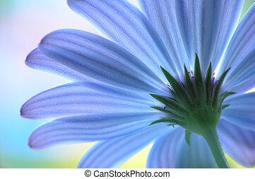 синий, цветок