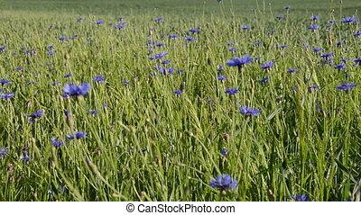 синий, цветок, рука
