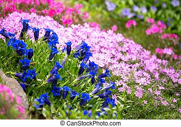 синий, цветок, сад, горечавка, весна, труба