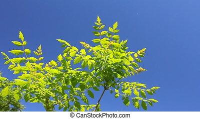 синий, leaves, зеленый, задний план