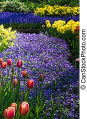 синий, tulips, anemone., daffodils