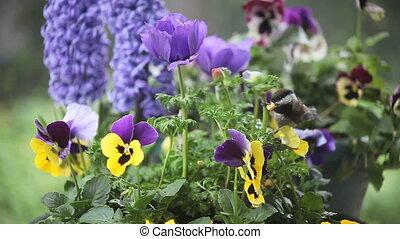 синица-гаичка, весна, цветы