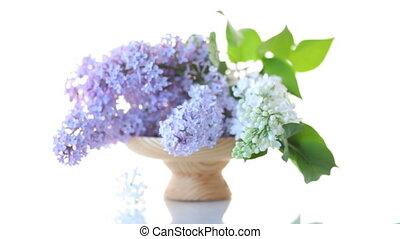сирень, букет, весна, isolated, blooming, белый