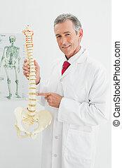 скелет, офис, врач, держа, улыбается, модель