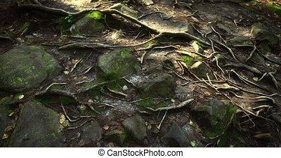 след, rocks, amongst, dovbush, дерево, подвергаются, roots