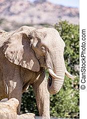 слон, covered, в, грязи