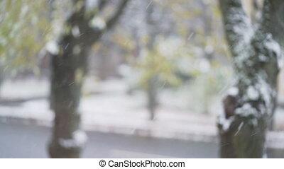 снег, размытый, leaves, trees, город, первый, задний план