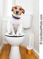 собака, на, туалет, сиденье