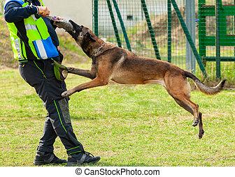 собака, руки, bites, объект, тренер, обучение