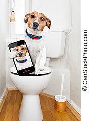 собака, сиденье, туалет