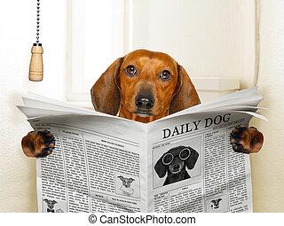 собака, сидящий, туалет