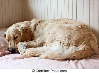 собака, спать, на, , постель