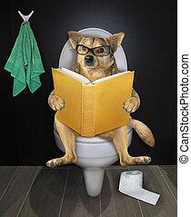 собака, туалет, книга, sits