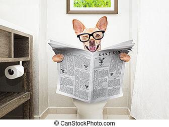 собака, туалет, сиденье, чтение, газета