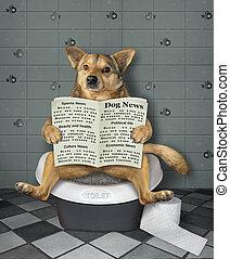 собака, biotoilet, газета, sits