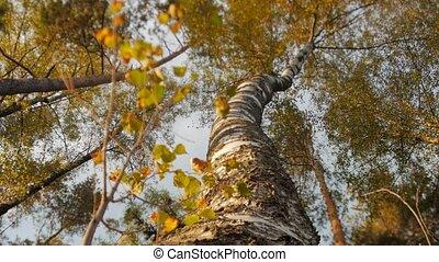 солнечно, дерево, вверх, ищу, тент, день