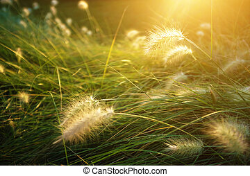 солнечно, растительность