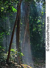 солнечный лучик, природа