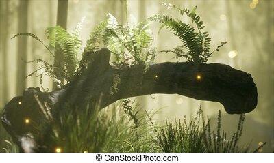 солнечный лучик, shining, выращивание, дерево, horizontally, bending, хобот, ferns